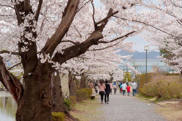 山形県鶴岡市 鶴岡公園