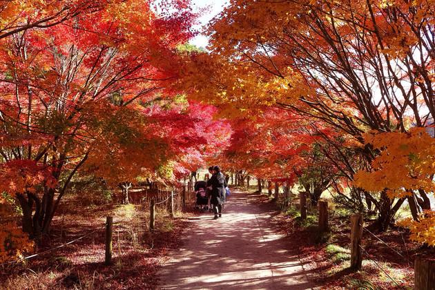 福島県、白水阿弥陀堂