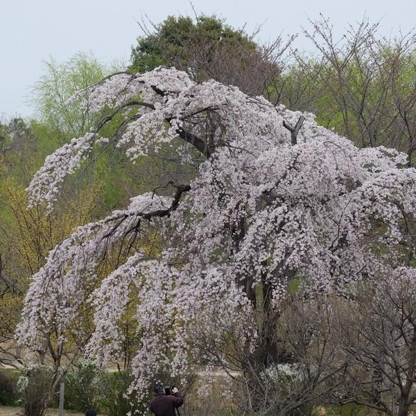 東京都昭和記念公園