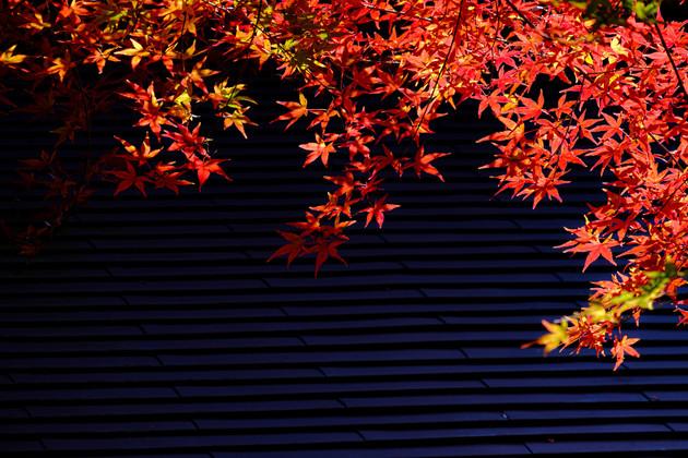 鎌倉市明月院