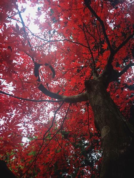広島県世羅