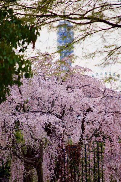 山下公園、横浜市