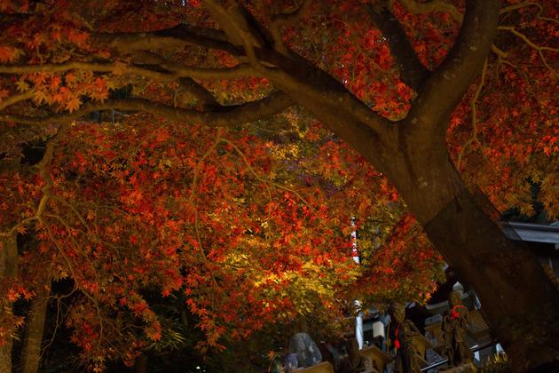 神奈川県 大山 阿夫利神社