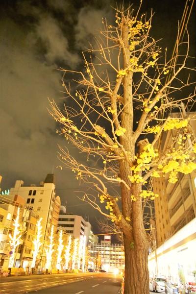 愛媛県松山市花園町