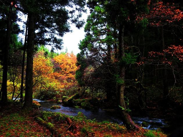 元滝伏流水へ向う林道