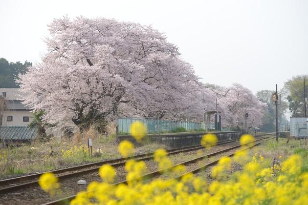 真岡鉄道 久下田駅