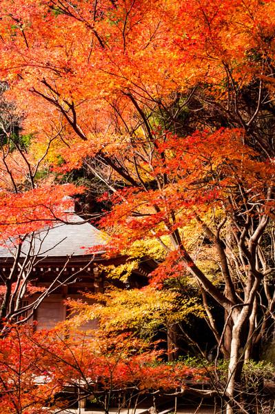 鹿児島県いちき串木野市冠嶽