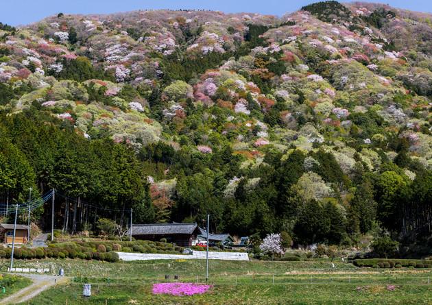 茨城県桜川市