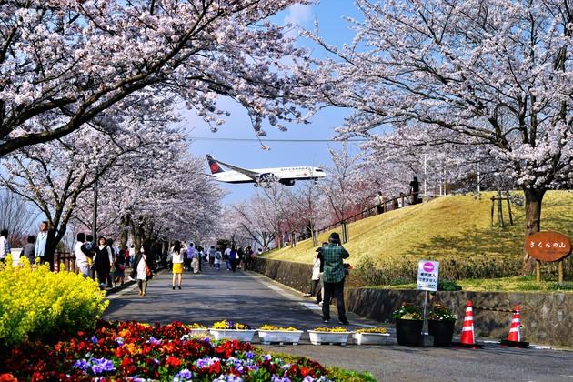 さくらの丘公園、千葉県成田市