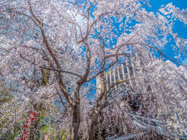 京都市六角堂