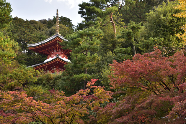 京都今熊の観音寺