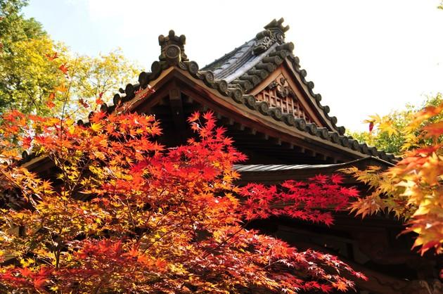 兵庫県三田 光明寺
