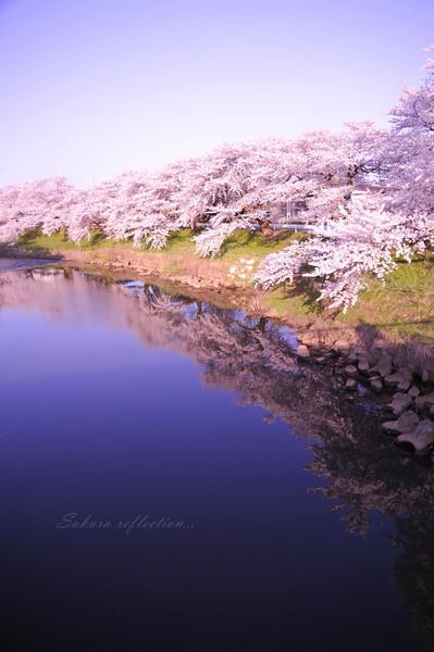 太平川桜並木