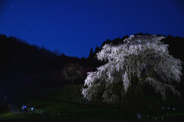 奈良県宇陀市 又兵衛桜