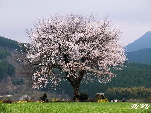 熊本県小国町