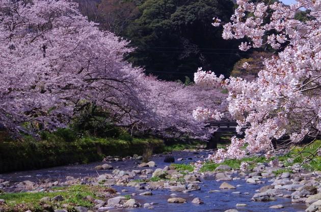 静岡県松崎町大沢温泉