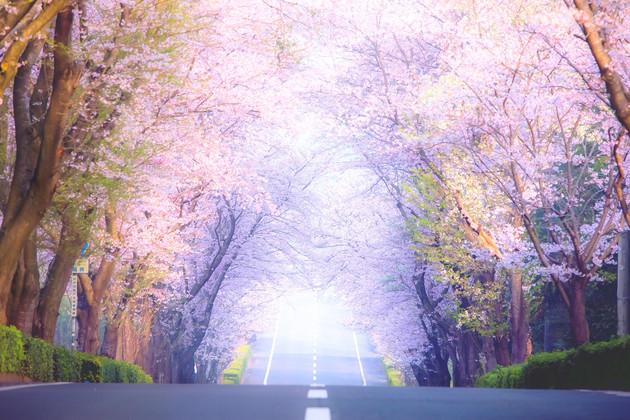 さくらの杜公園、茨城県守谷市
