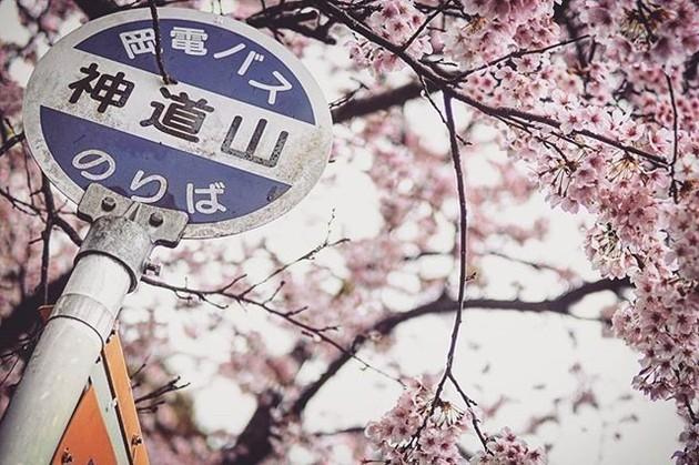 岡山県北区神道山