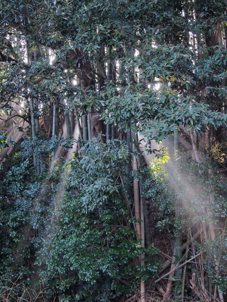 宮の森公園