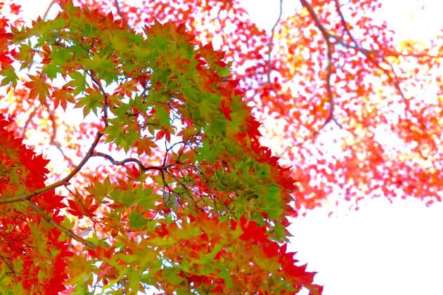 米沢市 松ヶ崎神社