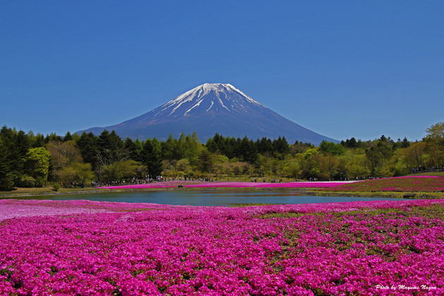 富士本栖湖リゾート