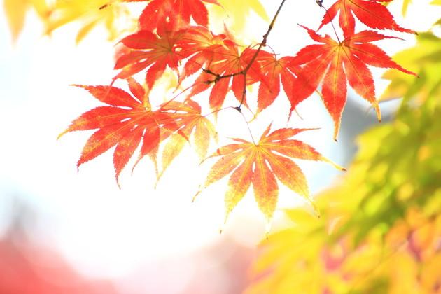 埼玉県 平林寺