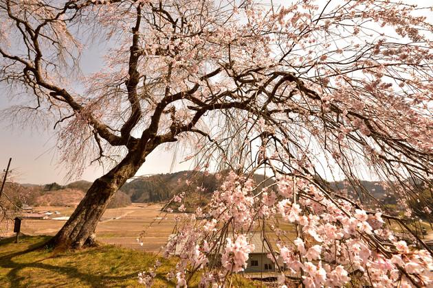 奈良県 小原