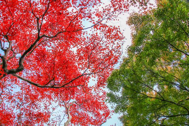 呉羽山公園 富山市