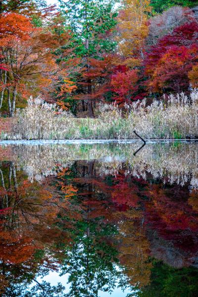 愛知県豊田市 タカドヤ湿地