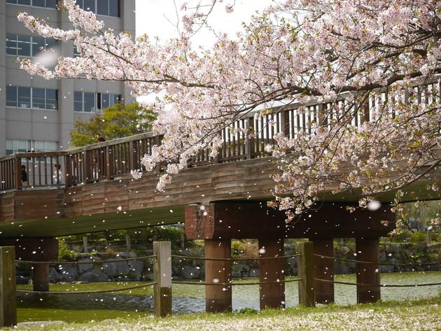 糸島市役所
