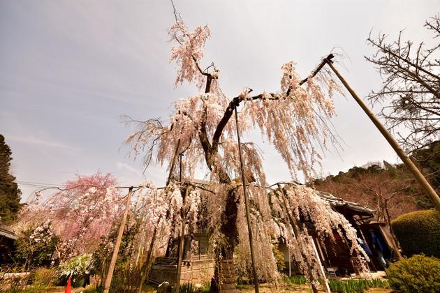 奈良県 大野