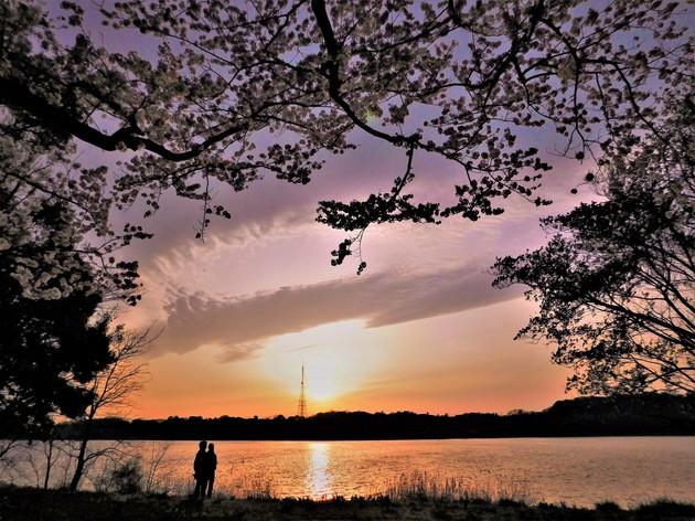 静岡県浜松市中区  佐鳴湖