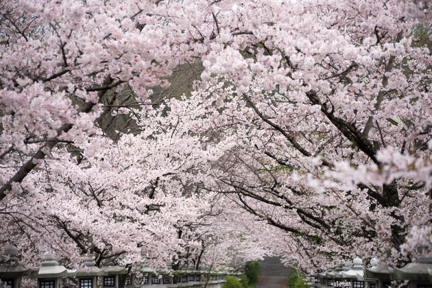 香川県高松市 竜桜公園
