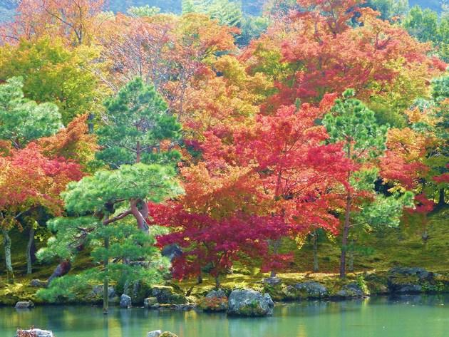 京都嵐山天竜寺