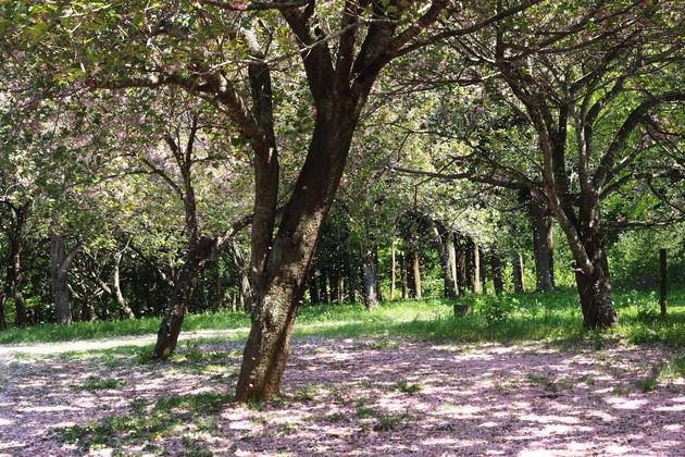 茨城県つくば市高崎自然の森