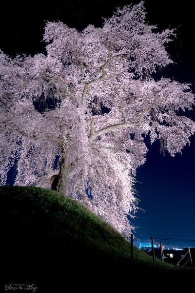 飯田市麻績の里 石塚の桜