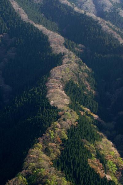 奈良県上北山村 ナメゴ谷