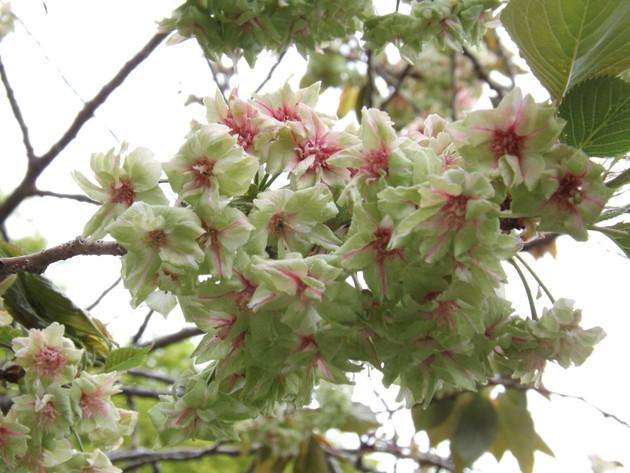 白野江植物公園(北九州市門司区)