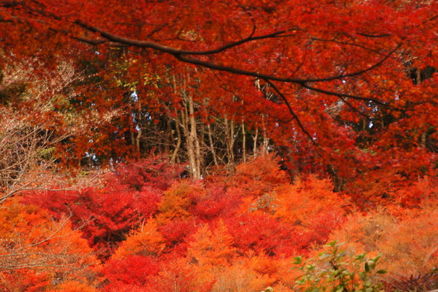 神戸市立森林公園