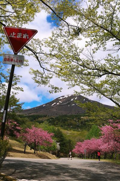 福島県、昭和の森