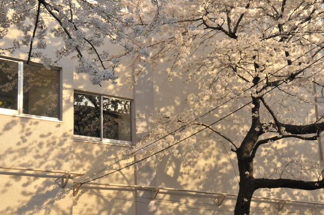 豊島区立駒込小学校