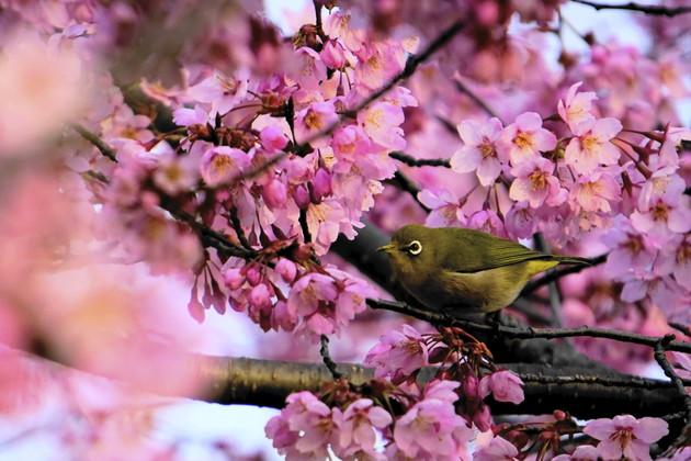 京都『梅小路公園』
