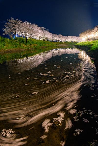 草場川の桜並木 福岡県朝倉郡筑前町