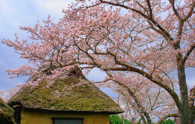 岡山県赤磐市 城山公園