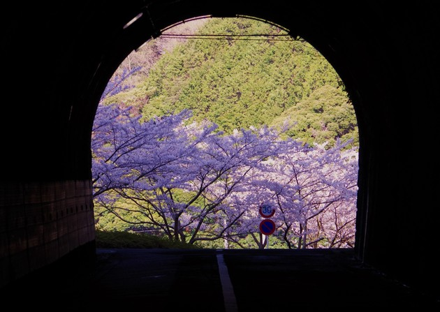 静岡県西伊豆町黄金崎