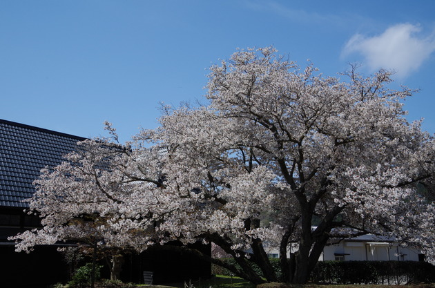 静岡県伊豆の国市浮橋