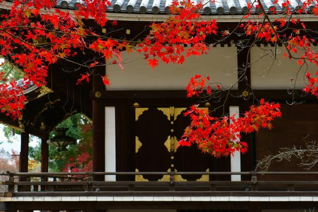 京都 御室仁和寺 金堂