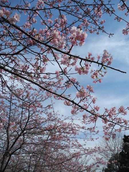 花博跡鶴見緑地公園