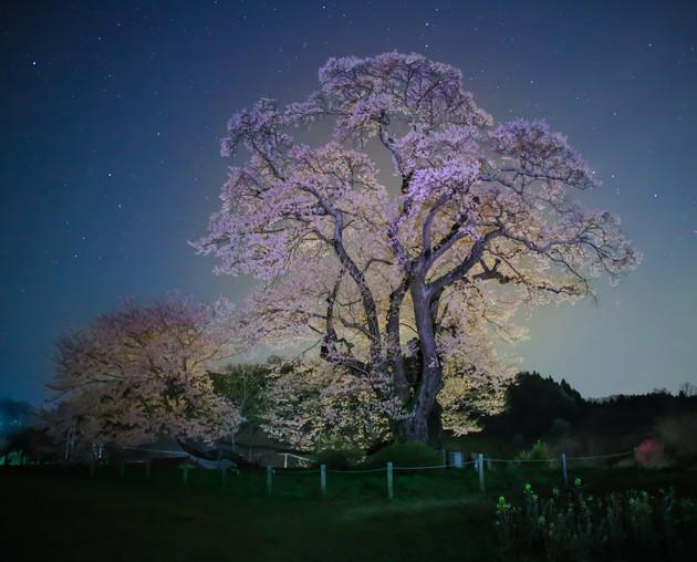 塩ノ崎の大桜、福島県本宮市