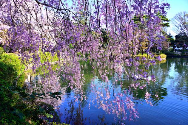 妙正寺公園、東京都杉並区